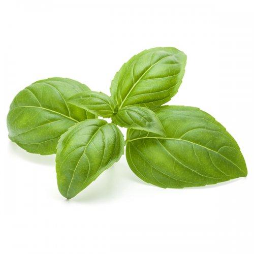 green_basil