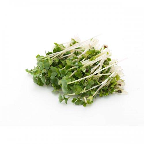 נבטי חמניה ירק ופטריות