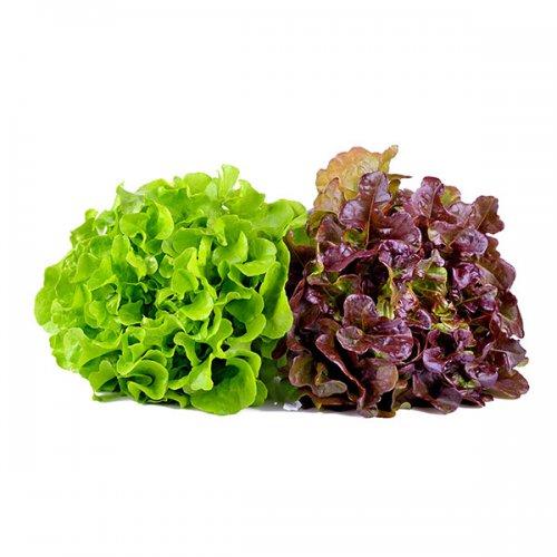 חסה סלנובה ירק ופטריות