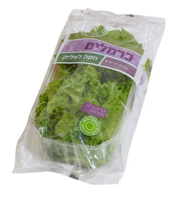 חסה לאליק ירק ופטריות
